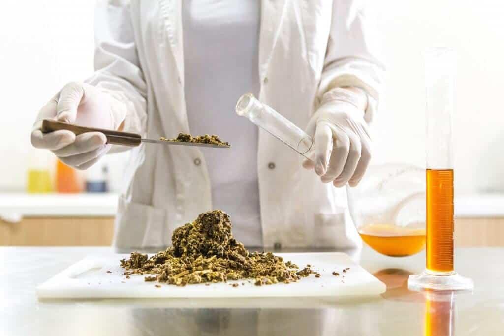 The History Of CBD: A Breakdown of Cannabis & Hemp in America