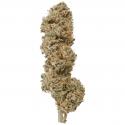 Plain Jane Stormy Daniels Hemp Flower – 7 gram bag